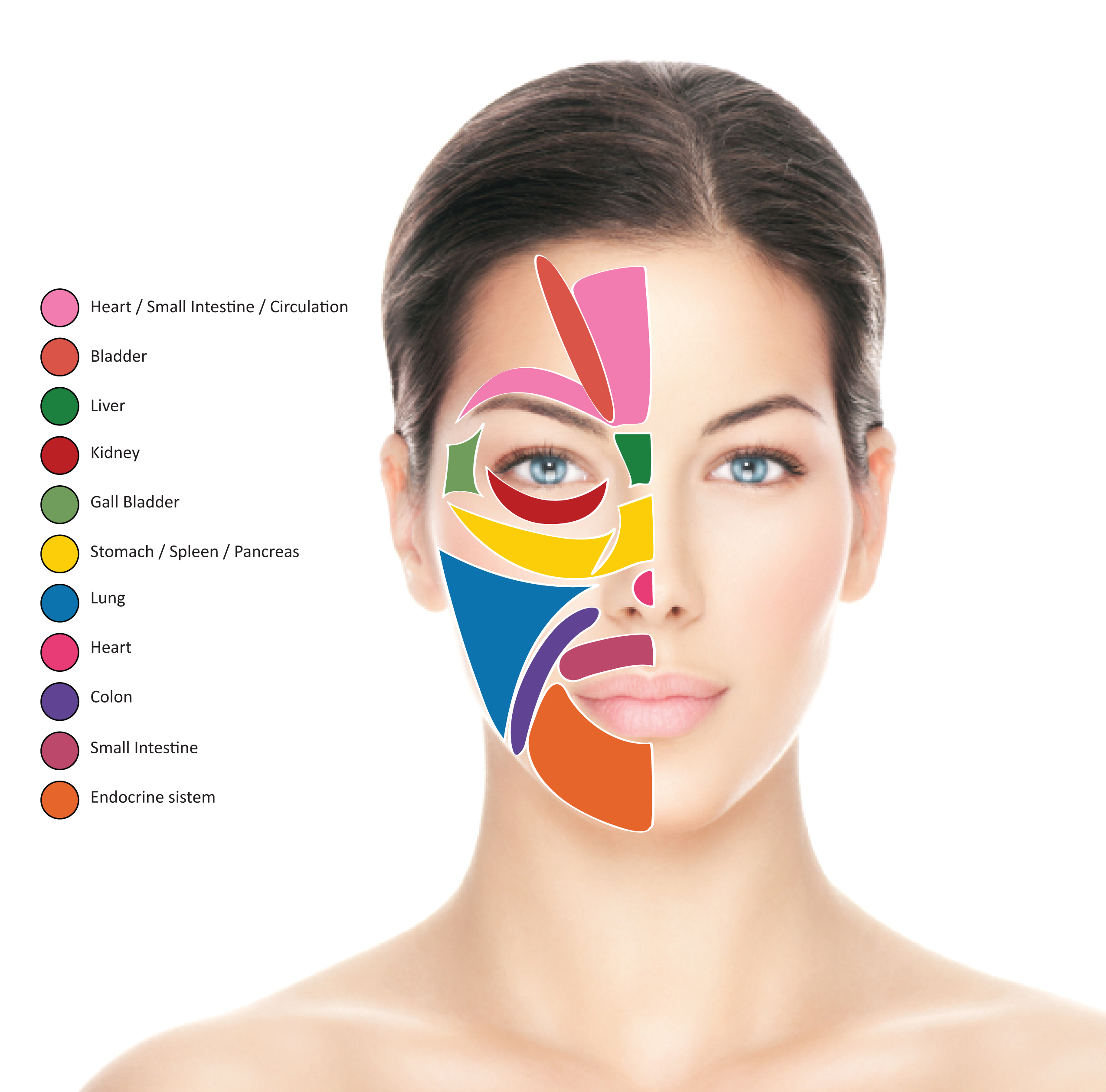 Facial reflexology map